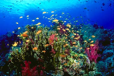 Skip's Underwater Image Gallery > Tropical Images