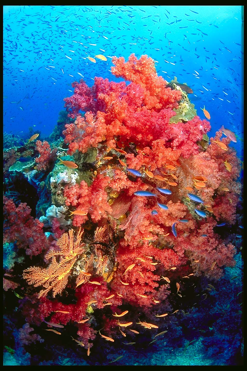beautiful colorful coral reefs - photo #14